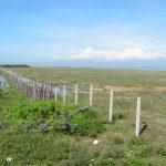 Flickr/台灣水鳥研究群彰化海岸保育行動聯盟 CC BY 2.0