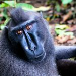 攝影師因「自拍猴子」版權訴訟而面臨破產
