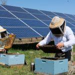 solar-honey