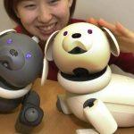 Sony AIBO 重出江湖?消息指 Sony 明年春天推最新智慧機械犬