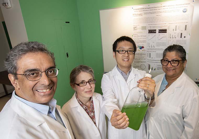 美團隊設計出可固氮的細菌,下一步要讓作物也能用空氣「自肥」