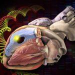恐懼死亡的總裁 基因研究協助擺脫家族病史