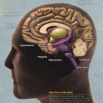 生活壓力增加21%患阿茲海默症機率