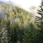 二十一世紀新伐木時代?歐洲環保政策成美國自然森林殺手