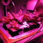 太空人吃下第一口「太空蔬菜」,讓人類離火星旅程更近一步了!
