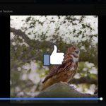 臉書影片廣告效果如何?只有 85% 聲音會被打開