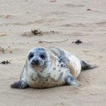 美國國家海洋暨大氣總署:千萬別跟海豹自拍