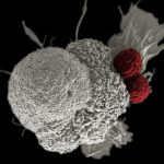 醫療科技最新突破!美核准首例 CRISPR 人體基因療法計畫