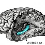 強化記憶的人工腦部裝置,有望商業化