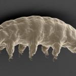 水熊蟲為何幾近無敵?科學家有了進一步發現