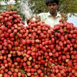 下載自路透 A roadside vendor sells lychees on a hot day in the northern Indian city of Allahabad May 31, 2005. Lychees have become more popular as the temperature is rising to more than 40 degrees Celsius (104F) in many parts of India. - RTXNIWZ