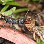 研究螞蟻驚人的定位導航能力,或能啟發機器人及自動車的設計