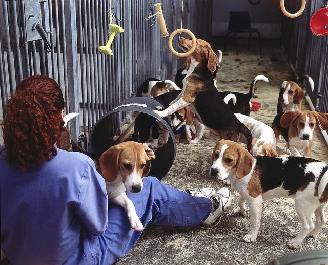 看不見的小心機,研究發現狗會操縱人