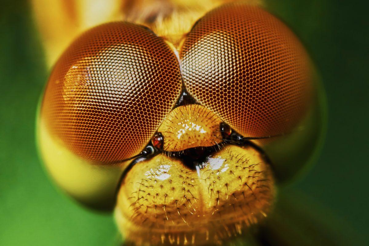昆蟲複眼啟發靈感,鈣鈦礦太陽能電池新設計由小見大