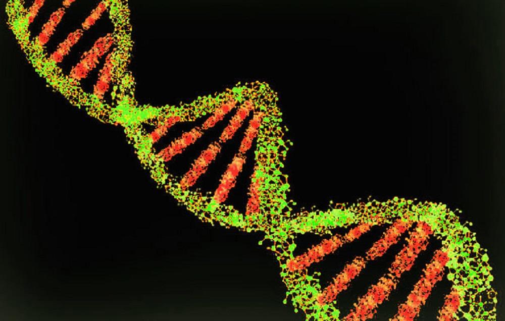 科學家拍下 DNA 複製影片,意外發現 DNA 複製和他們想的不一樣
