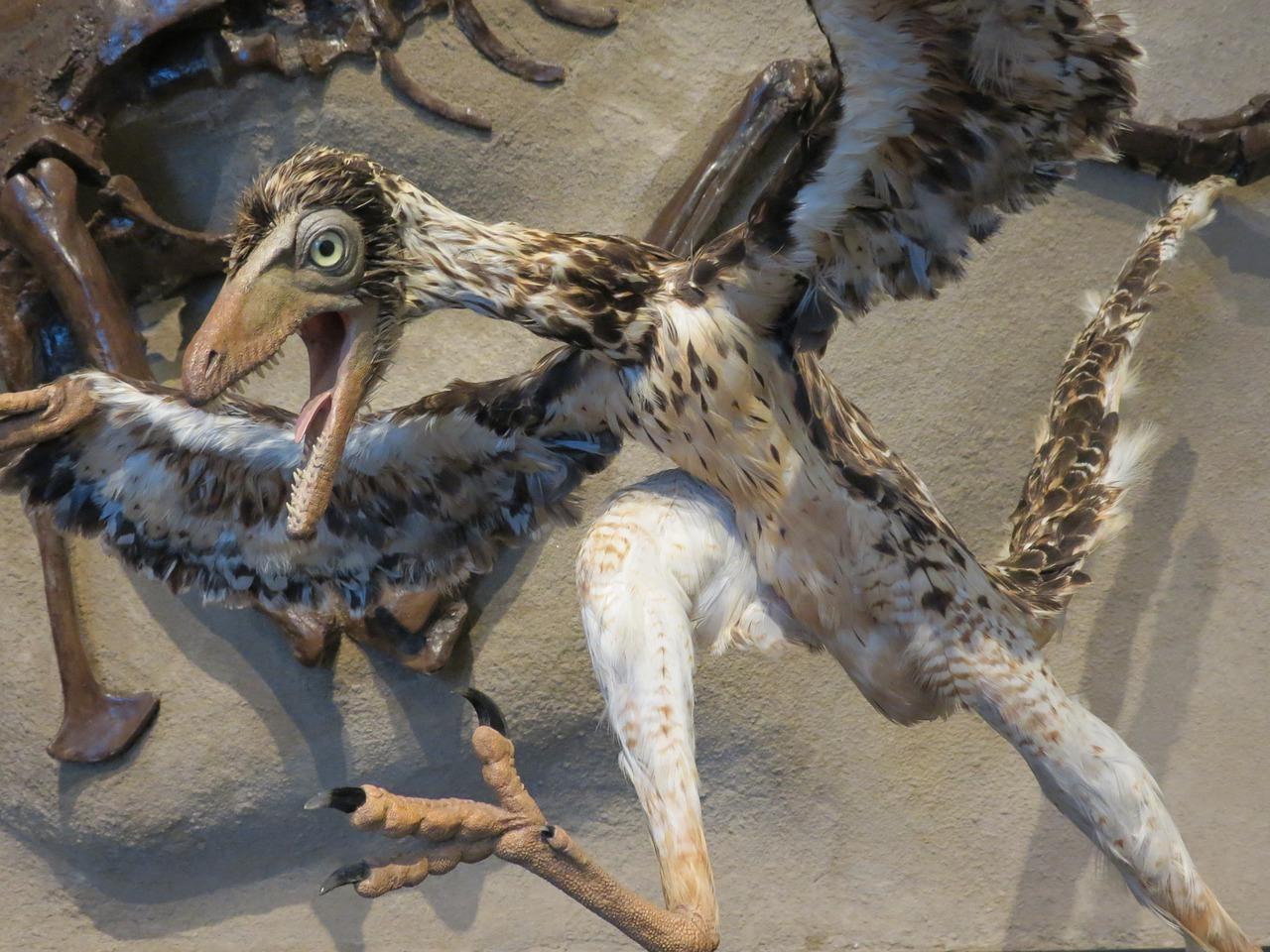 https://img.technews.tw/wp-content/uploads/2017/09/29111022/archaeopteryx-1645455_1280.jpg