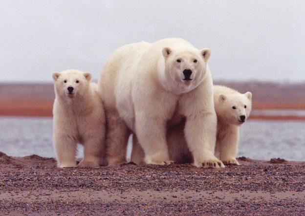 權威期刊又證實,極端氣候肇因來自北極 - 華安 - ceo.lin的博客