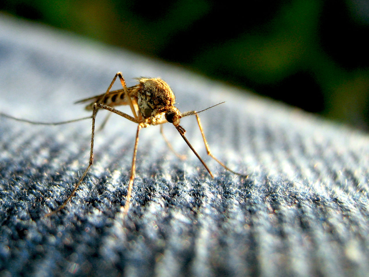 不用再靠任何滅蚊妙方,研究首度證明:你可以訓練蚊子不敢咬你