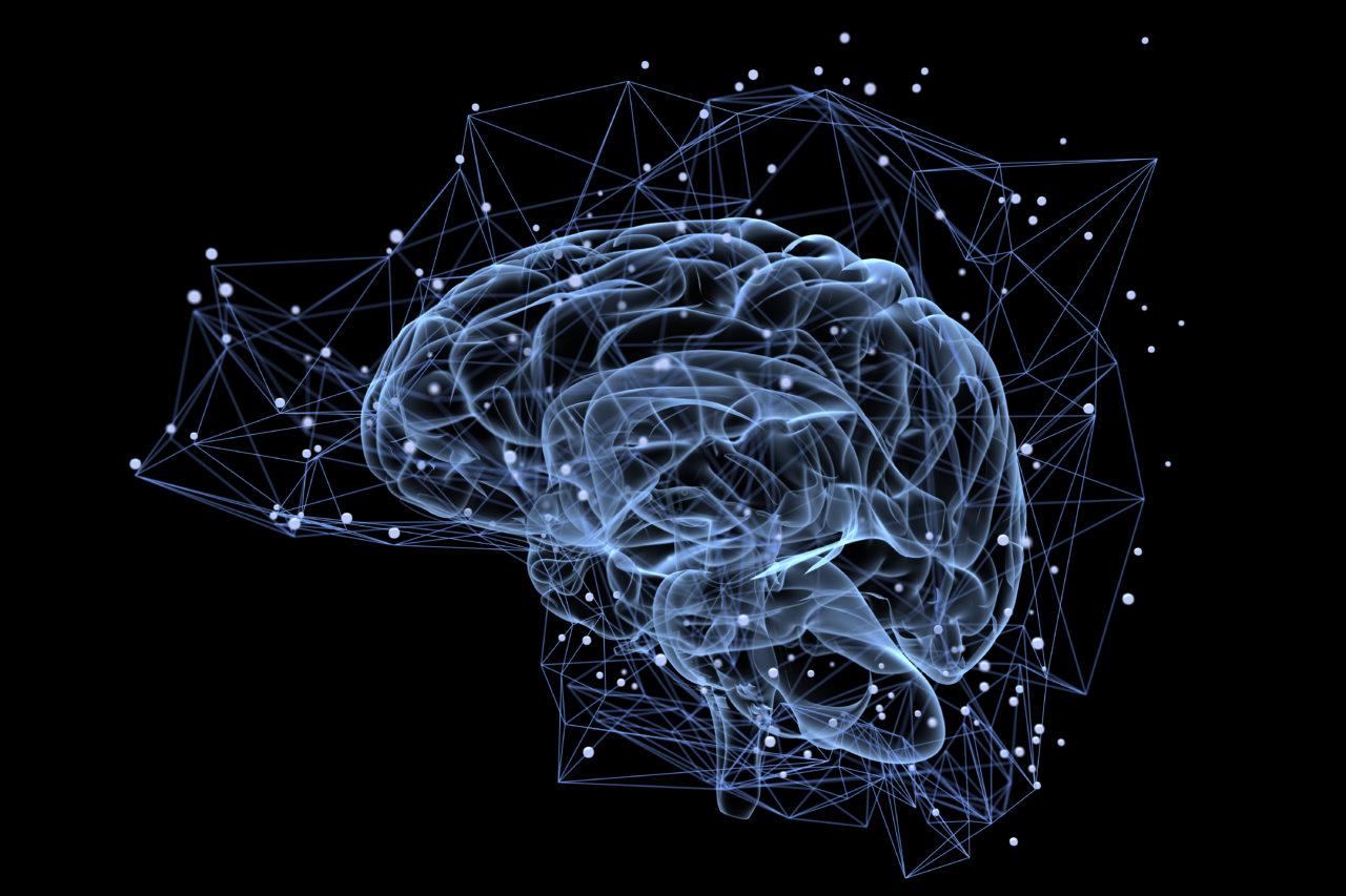 顛覆認知!新實驗表明成人大腦不會再生成新神經元