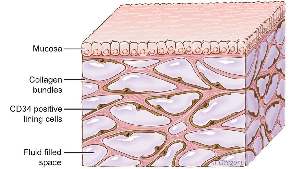 科學家稱發現人體新「器官」!可能和癌症傳播息息相關