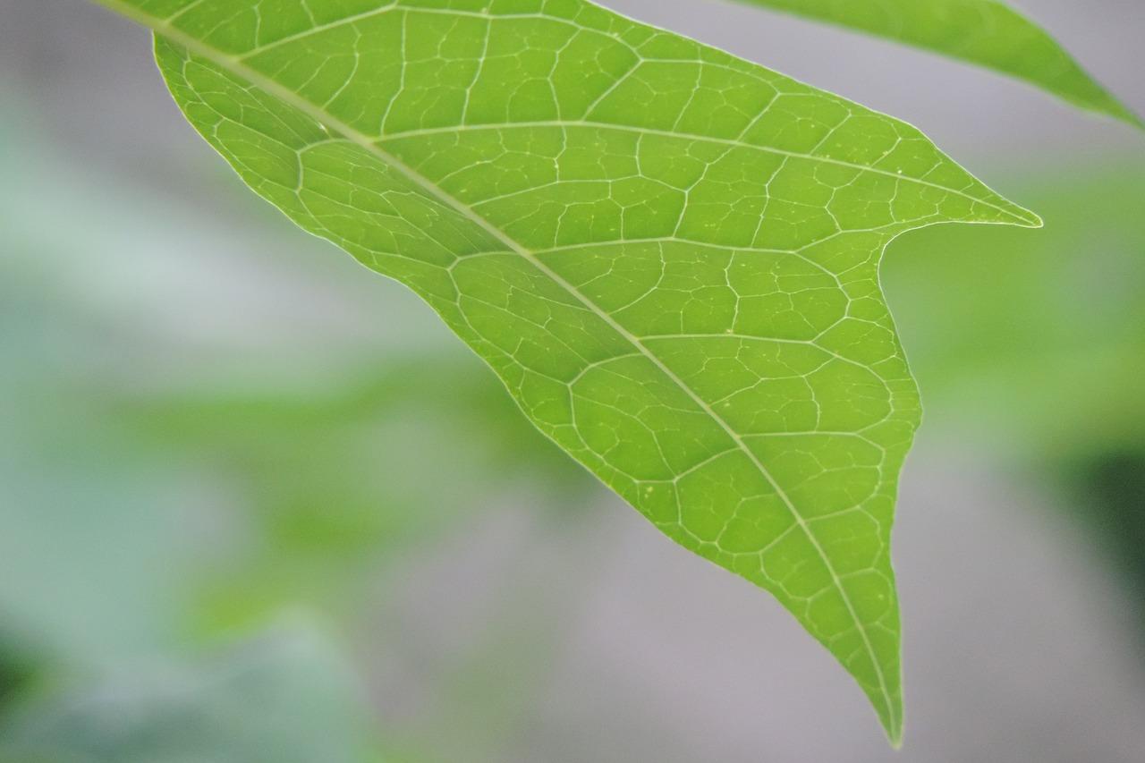 破解藍綠藻光合作用之謎,用以提升太陽能電池效率