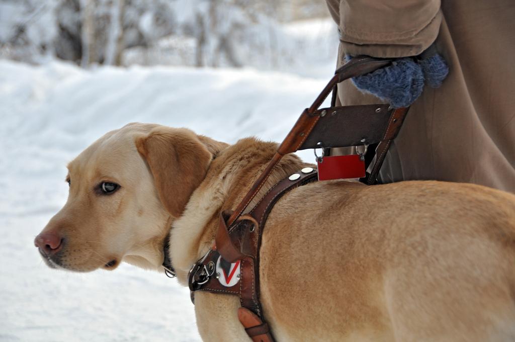 蘋果傳開發導航智慧衣,有機會取代手杖導盲犬
