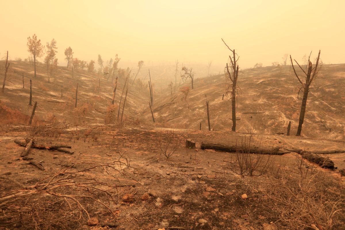 全球熱浪來襲的隱憂