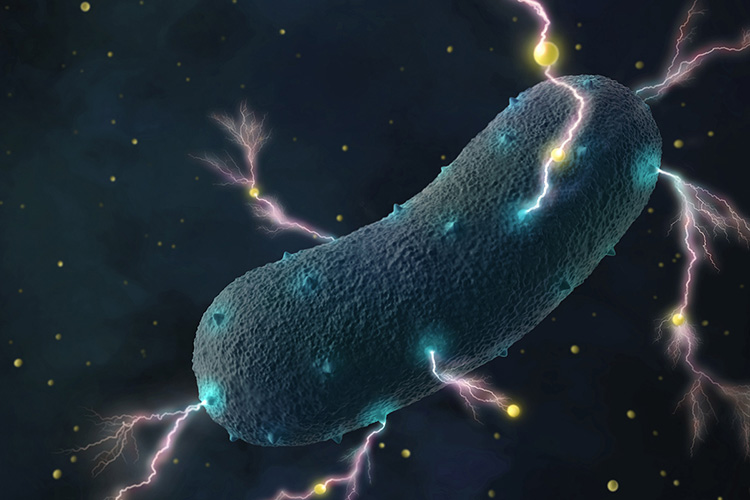 不用去礦坑湖底尋找,科學家發現腸道細菌就能有效產電
