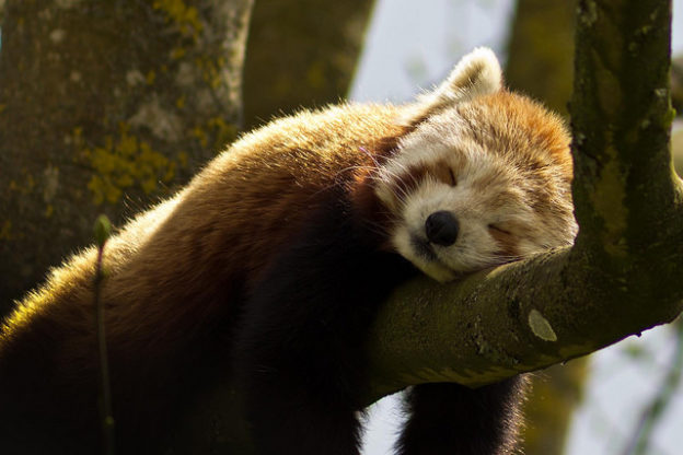 冬天只想冬眠,科學家指人類睡愈多愈抑鬱