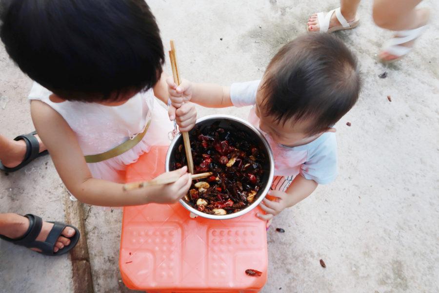 蟑螂農場新商機,中國消化廚餘好幫手