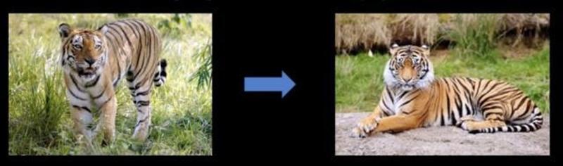 AI 將長頸鹿圖片轉成鳥,還騙過人類與機器